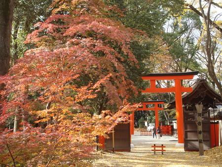 河合神社を包む紅葉