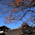 Photos: 嘯月楼前
