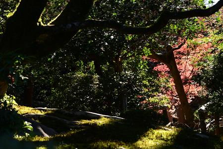 影と緑と紅葉と