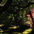 Photos: 影と緑と紅葉と
