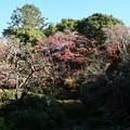 Photos: 庭園東側