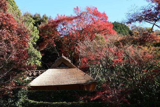 紅葉の芭蕉庵