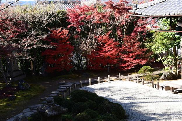 金福寺庭園の色づき