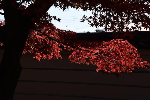 妙顕寺の紅葉景色