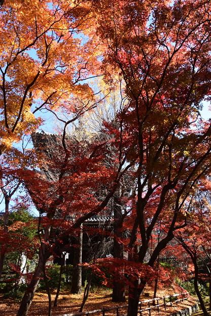 塔を彩る紅葉