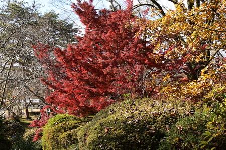 花菖蒲園脇の紅葉