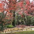Photos: 閑院宮邸跡の紅葉