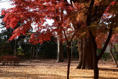 児童公園西の紅葉