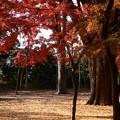 Photos: 児童公園西の紅葉
