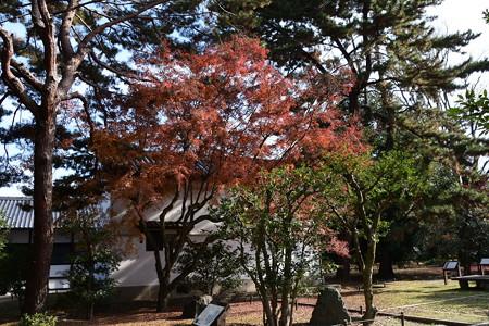 閑院宮邸跡の紅葉