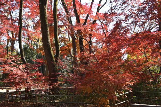 赤く染まる糺の森