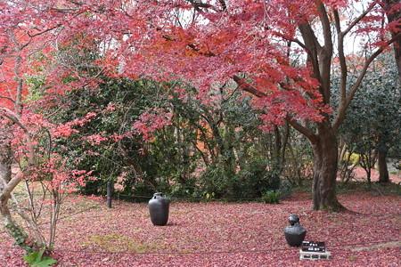 植物園の紅葉風景