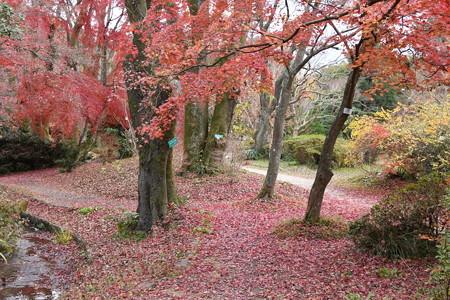 生態園脇の紅葉