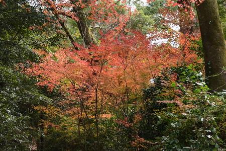 半木神社奥の紅葉