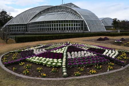 お正月準備の植物園