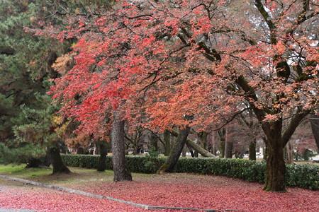 京都迎賓館前の紅葉