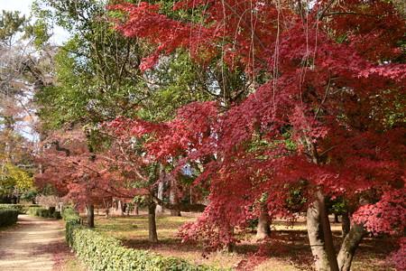 児童公園北側の紅葉