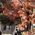 Photos: 総門脇の紅葉