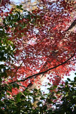 まだ残る紅葉