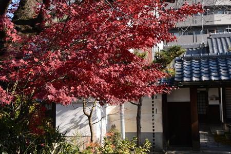 妙蓮寺の紅葉