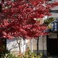 Photos: 妙蓮寺の紅葉