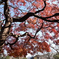Photos: 玄武公園の紅葉