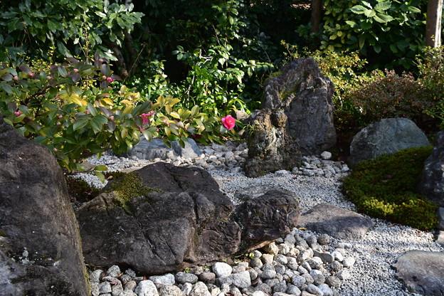 山茶花咲く豊栄(とよさか)の庭
