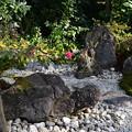Photos: 山茶花咲く豊栄(とよさか)の庭