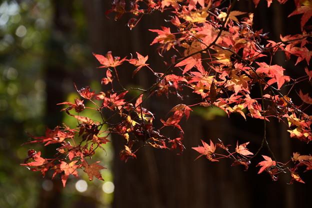 まだ盛りの紅葉
