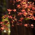 Photos: まだ盛りの紅葉