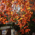 御手洗三本杉脇の紅葉