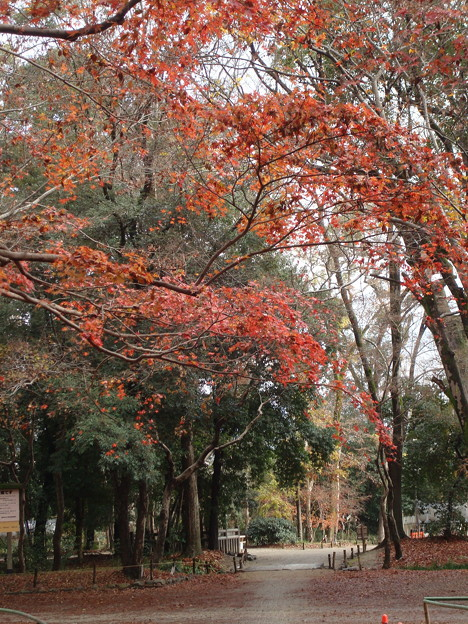 糺の森の紅葉