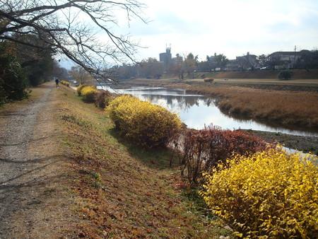 冬景色の賀茂川