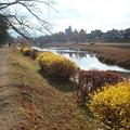 Photos: 冬景色の賀茂川
