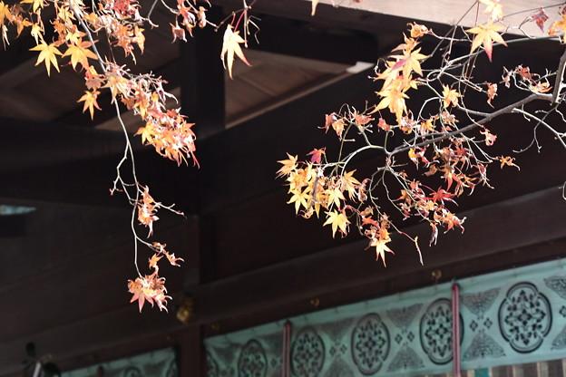 お正月の残り紅葉