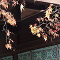 Photos: お正月の残り紅葉