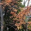 Photos: まだ残る紅葉