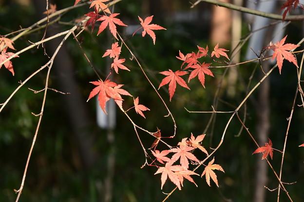 下鴨神社の残り紅葉