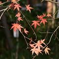 Photos: 下鴨神社の残り紅葉