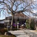 Photos: お正月の本満寺