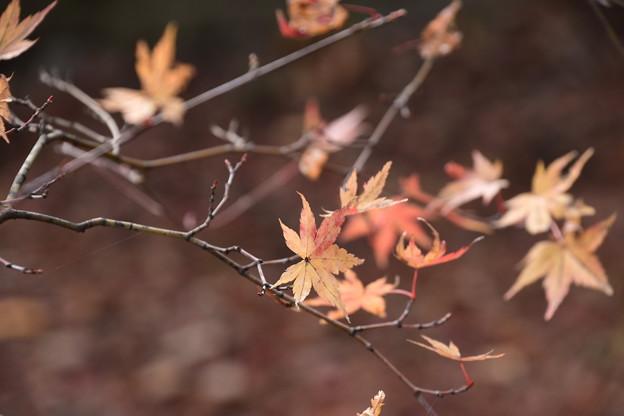 北野天満宮の残り紅葉