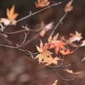 Photos: 北野天満宮の残り紅葉