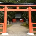 Photos: 半木(なからぎ)神社