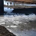 Photos: 氷の張った賀茂川