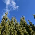 冬の空と雲