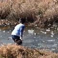賀茂川の氷