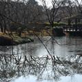 氷の残る池