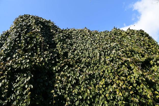 葉っぱの断崖