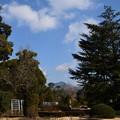 Photos: 植物園の冬景色