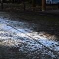 Photos: 雪の残る植物園